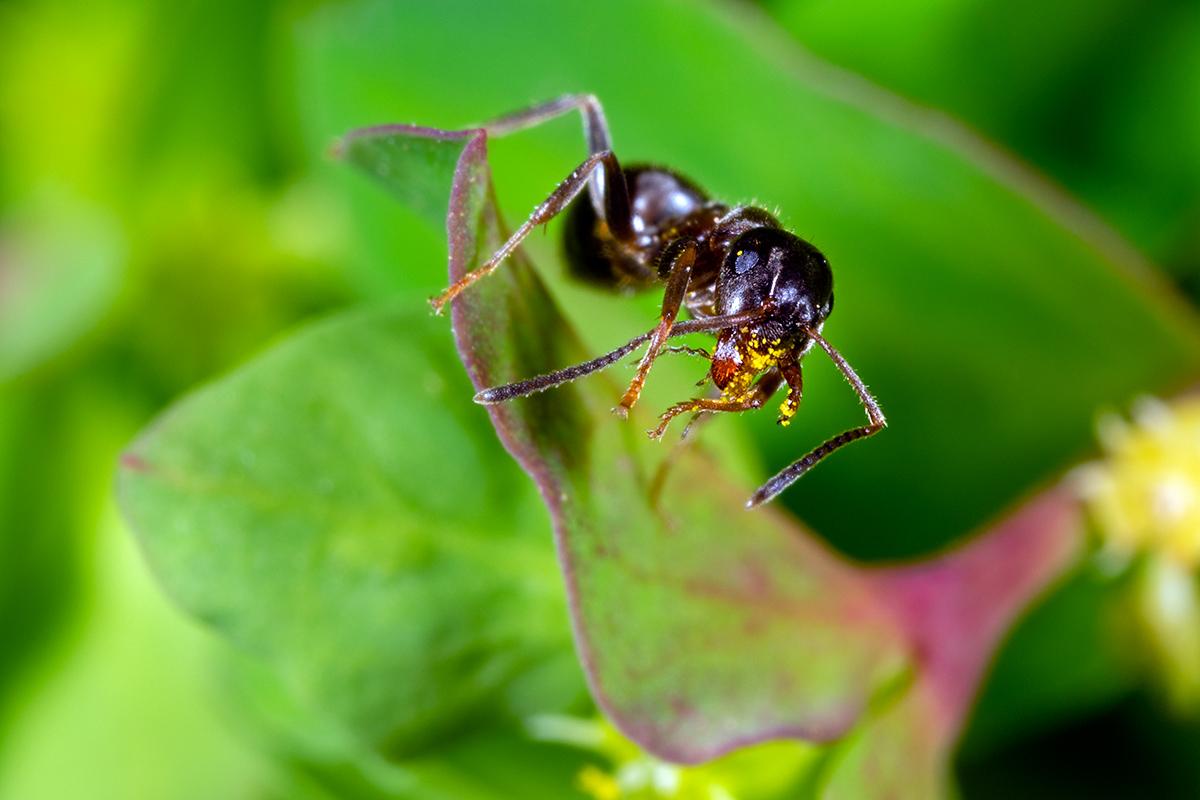 Macros/  proxi/  insectes  - Page 19 51009547511_927ae40ace_o