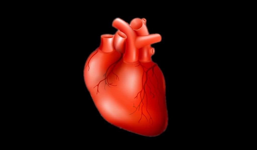 imprimer-des-organes-en-3D-rapidement