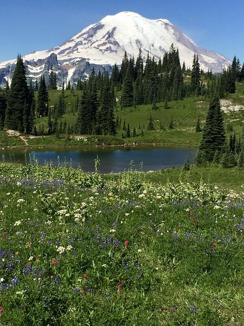 Mount Rainier with wildflowers in summer