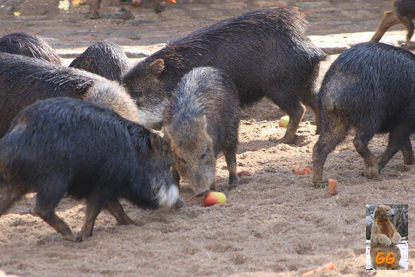 Besuch Zoo Berlin 27.03.21065