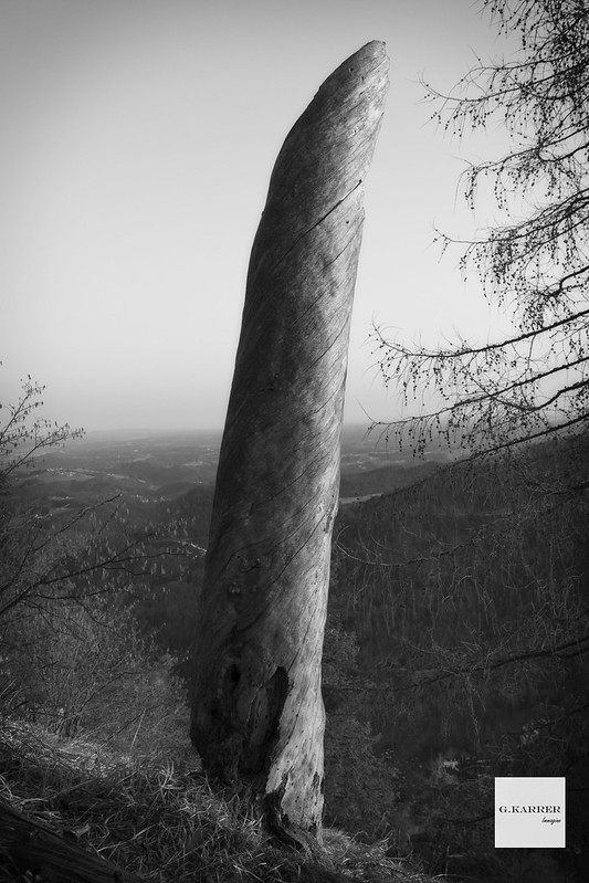 The lost the monument tree