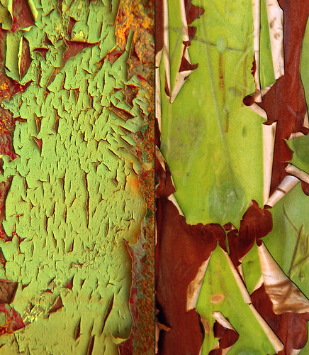 Abstract combo collage of bright green and rust bark of the Arbutus tree combined with cracked paint on a dumpster