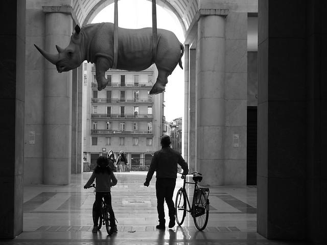The Flying Rhino!