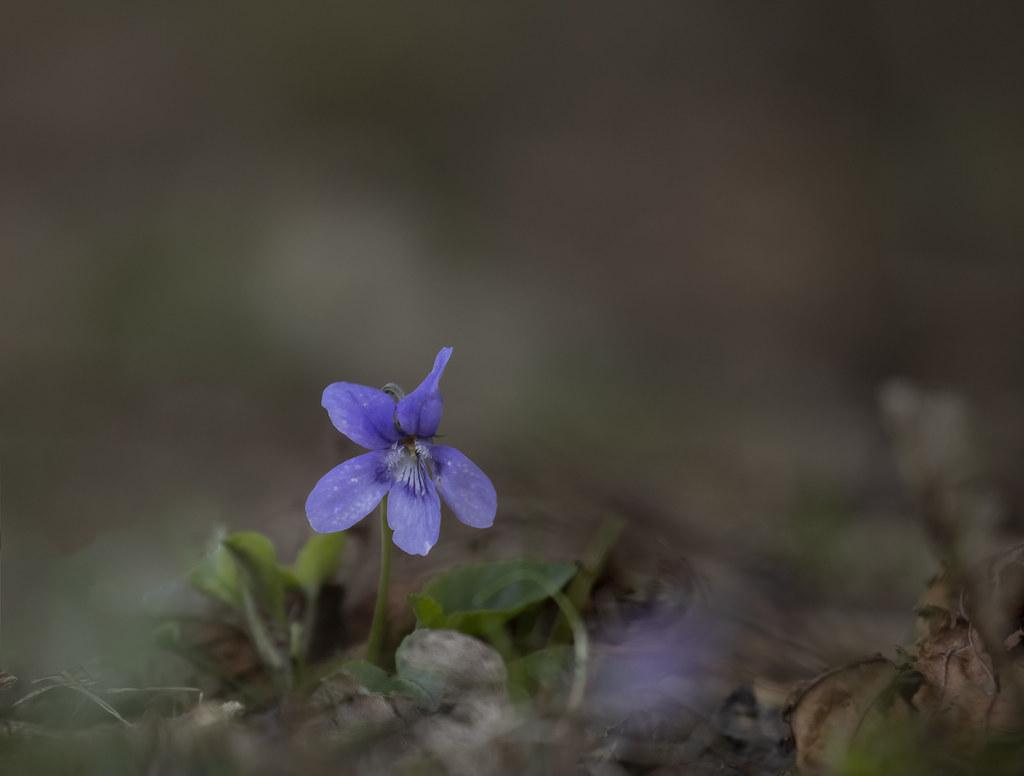 Violet_0636 copy