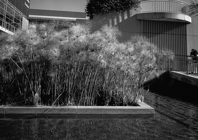 Yerba Buena Garderns, SOMA, San Francisco
