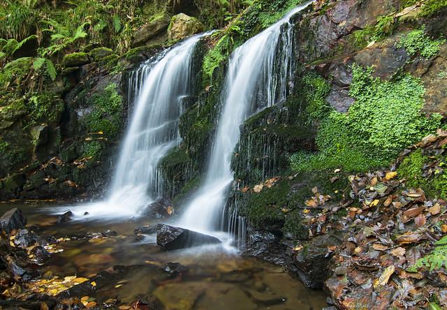 Rincones del bosque  (Explore 7-3-21)