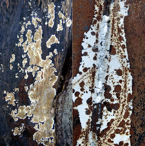 Abstract combo collage of tree bark with white fungi and a rusting dumpster