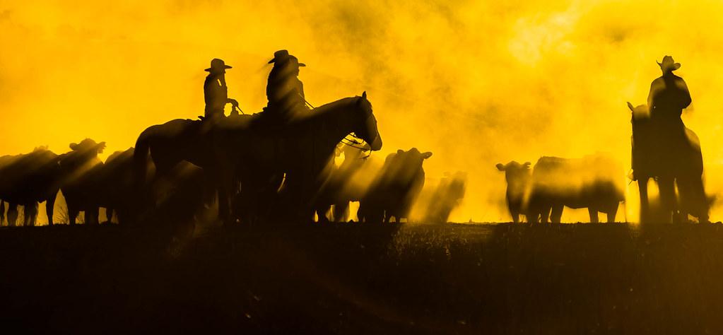 Dusty Dawn by Ellen Clark