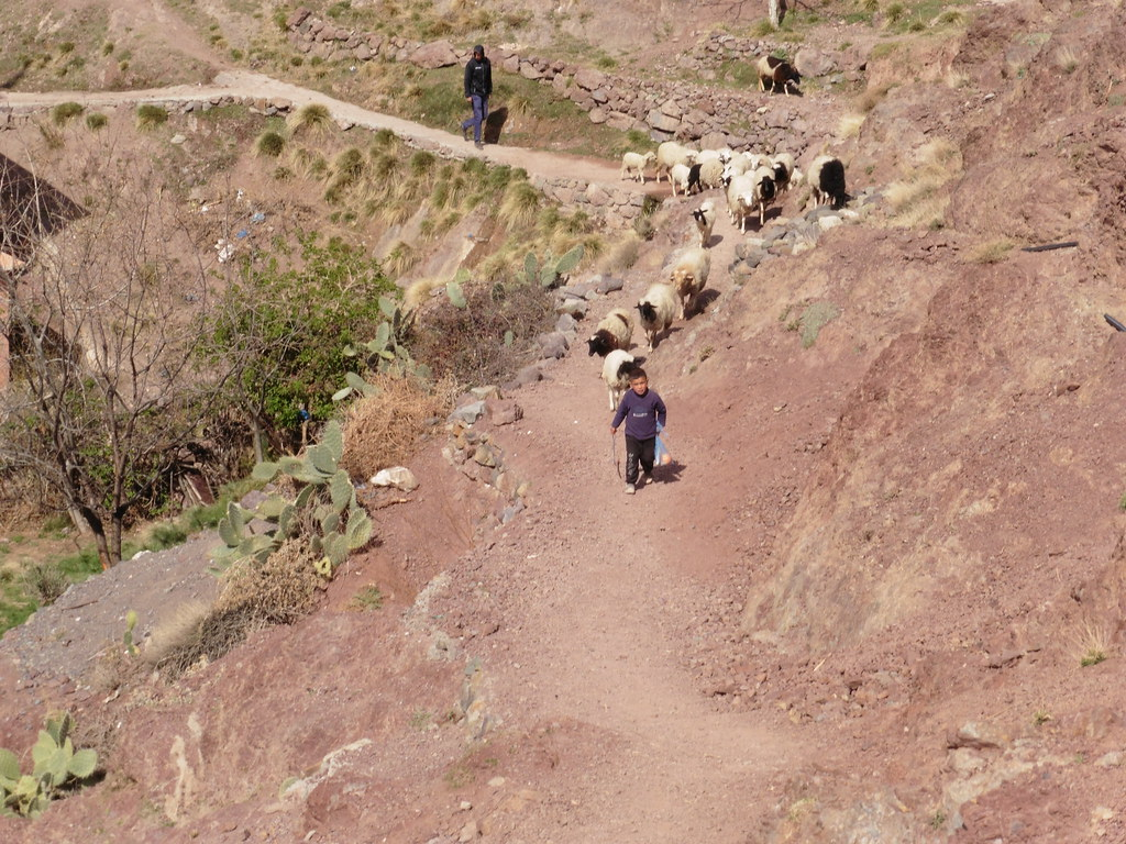 A young shepherd leads his herd in the Atlas Mountains, Morocco