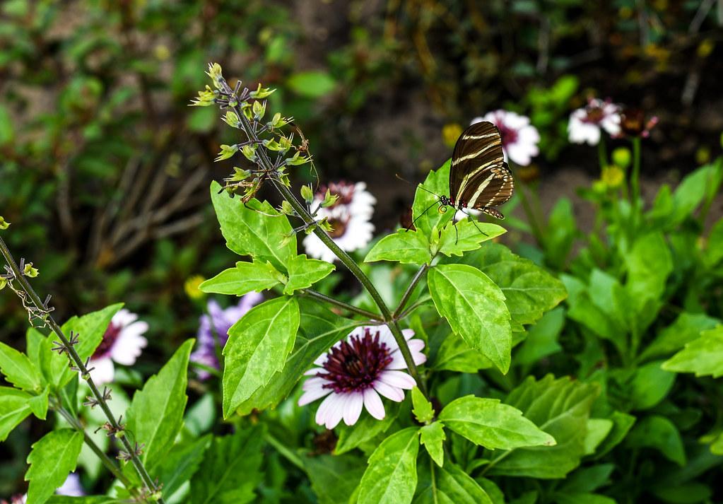 Butterfly flower & garden Epcot