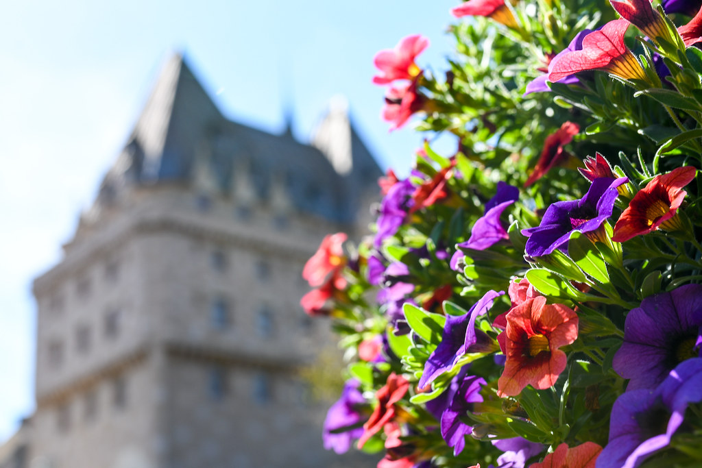 Canada garden flowers Epcot