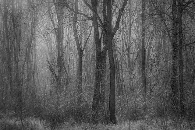 Into the woods.....