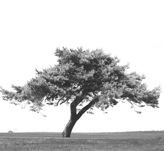 Tree as a solitaire