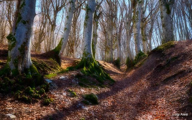 Riserva naturale del monte San Vicino