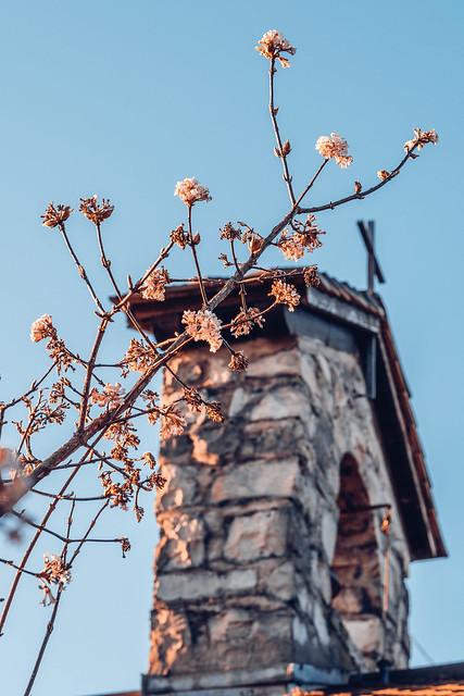 Cherry Blossom Chapel