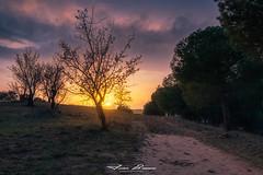 Senda de los Almendros | Castronuño | 2021