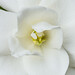 Gardenia 6.8.17