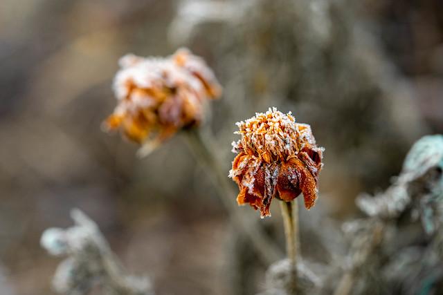 frosty, winter morning