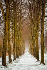 line of trees ...