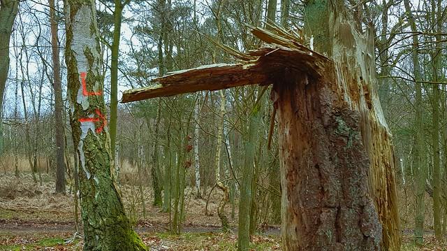 20210329 Förster- und Natur-Zeichen / Forester- and Nature-Signs