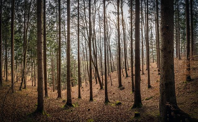 Bannwald explored