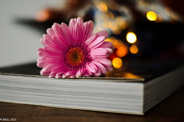 365 ~ 66 ... Garden Book! ~ In Explore