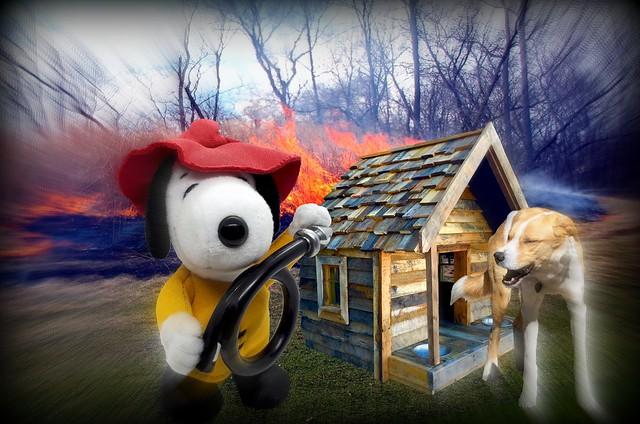 Help! Fire! - Bijou Planks 66/365