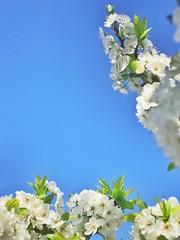 Casi Primavera ud83cudf38