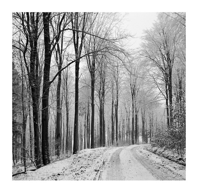 Late snow, local forest