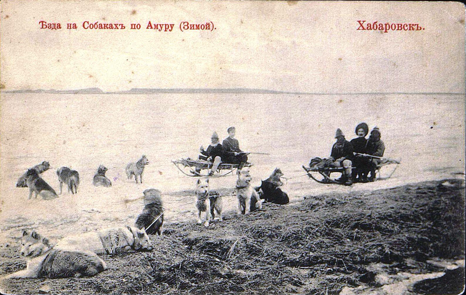 Езда на собаках по Амуру (зимой)