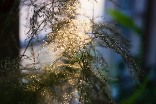 ferns-9 | by heather morris photography