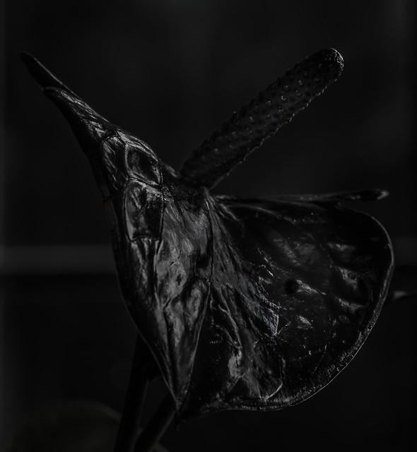 A black cat in a coal cellar……