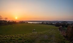 The sunset gathering