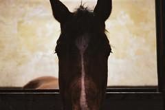 Winter horseriding contest