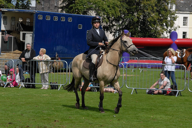 Showjumping  143 - Perth Agricultural Show 2018
