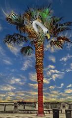 Avila Palm Bird