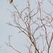 Uccello insolito