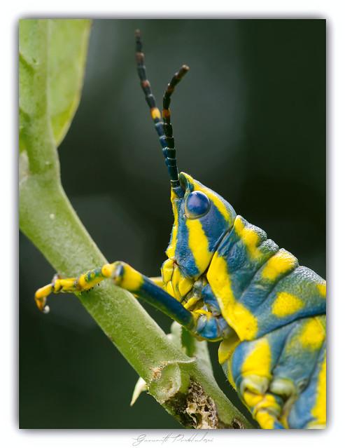 Portrait of a colourful fella....