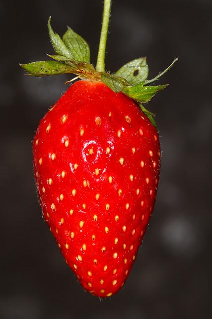 20210308_3615_7D2-100 Strawberry (067/365)