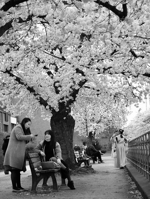 Cherry blossom top