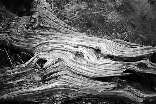 Wood Grain (1)