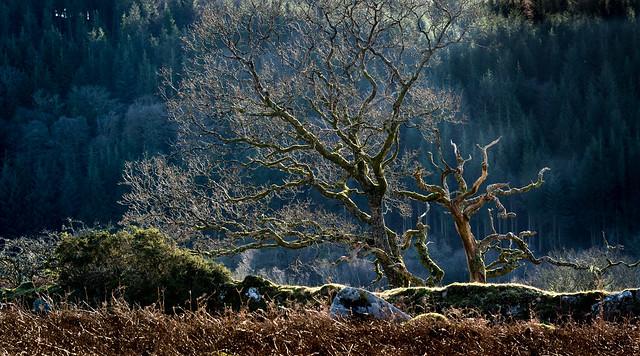 Backlit tree in winter - NK2_9161