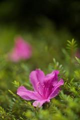 u82b1u958bu82b1u843d Flower bloom and fade