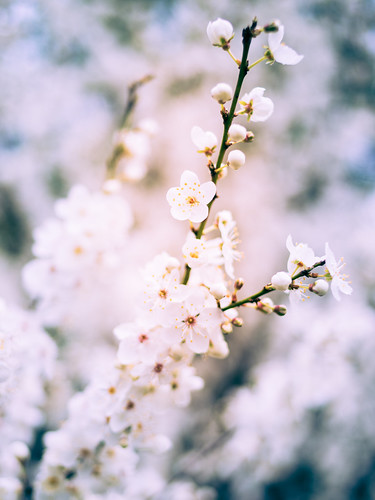 Blossom reprocessed | by Welsh Photographer