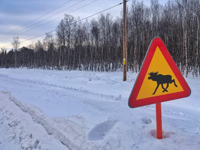 Señal de aviso de alces en la carretera (Suecia)