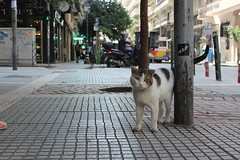 Cat in Thessaloniki