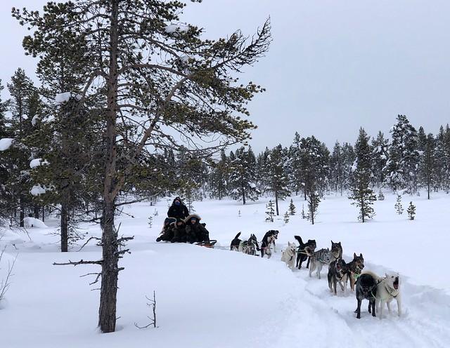 Trineo de perros en Laponia Sueca