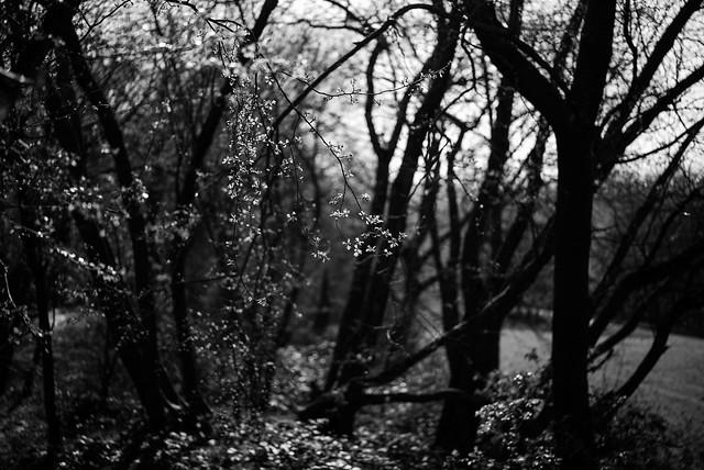 spring light 6 @ walking path