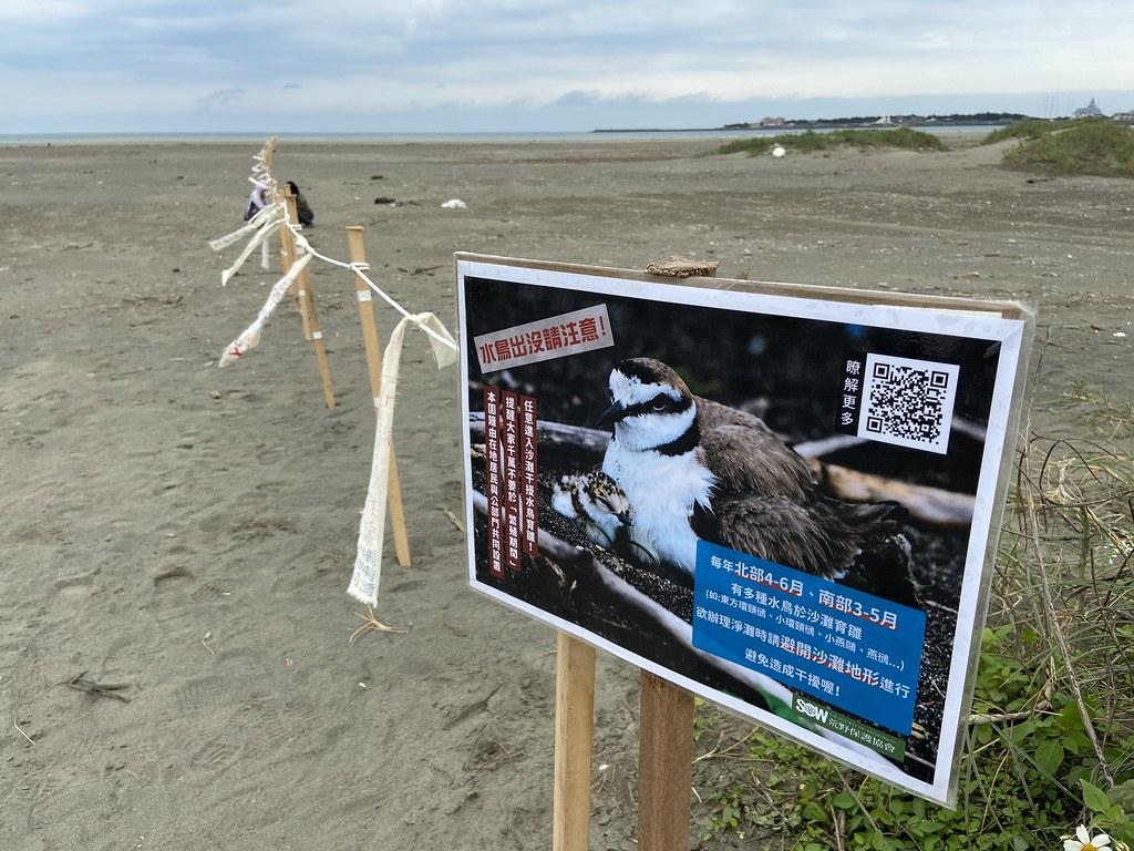 沙灘上水鳥出沒注意 米倉國小與荒野豎立護生圍籬 讓鳥媽媽安心育雛