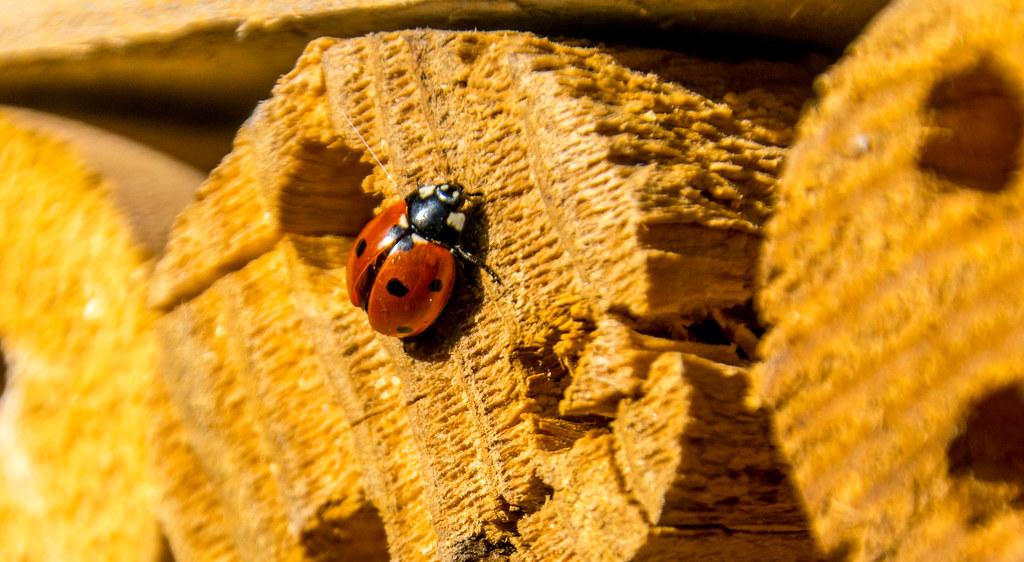 Ladybird walk